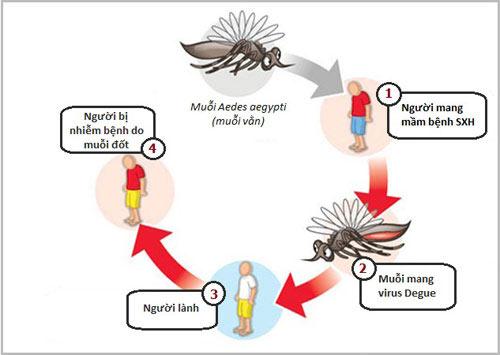 Con đường lây nhiễm bệnh sốt xuất huyết ở trẻ