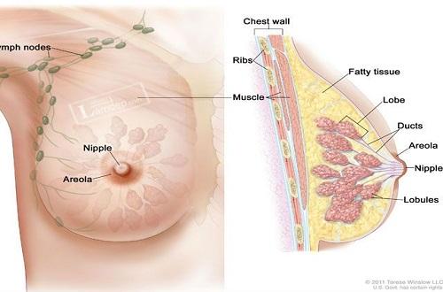 Cần bổ sung đầy đủ vitamin D ngăn ngừa ung thư vú