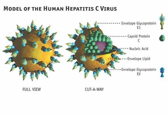 Bệnh viêm gan C sát thủ nguy hiểm cần phòng tránh